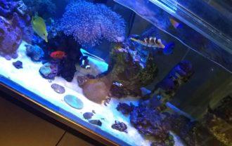ことぶき歯科海水魚水槽